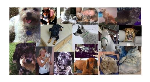 Pets of UA