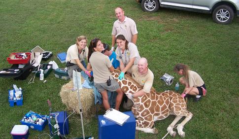 Veterinary Technician Week 2014
